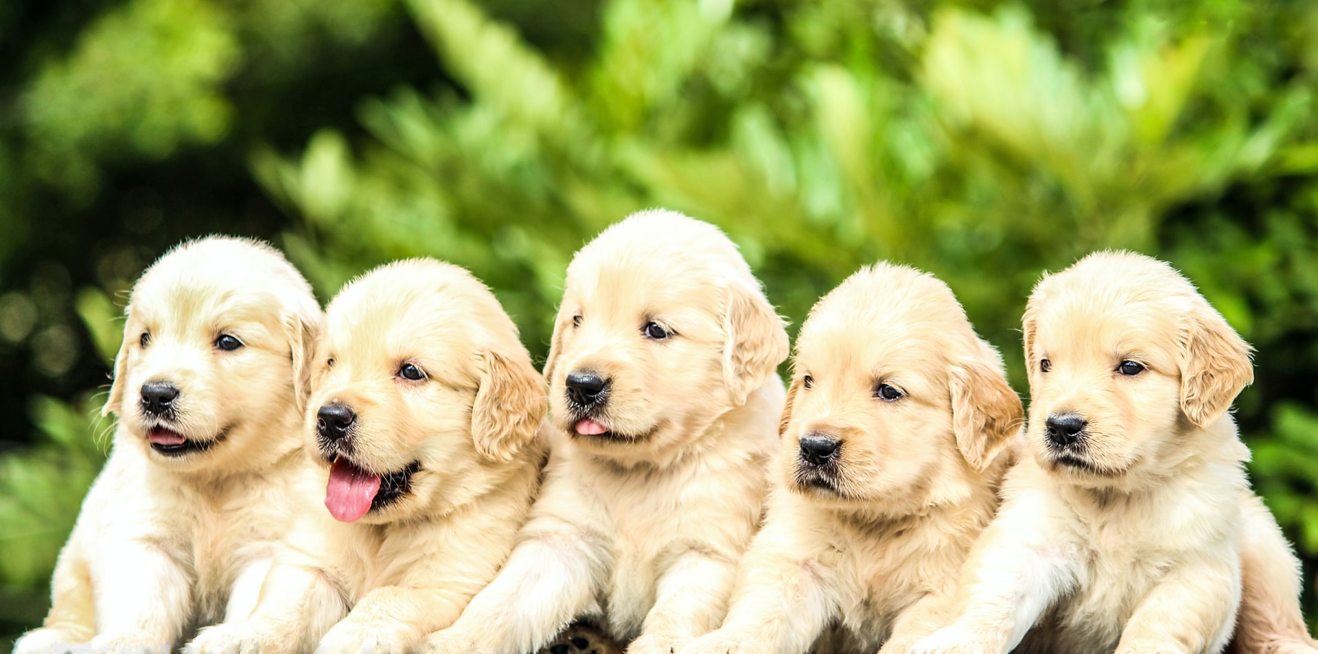 can dogs improve health