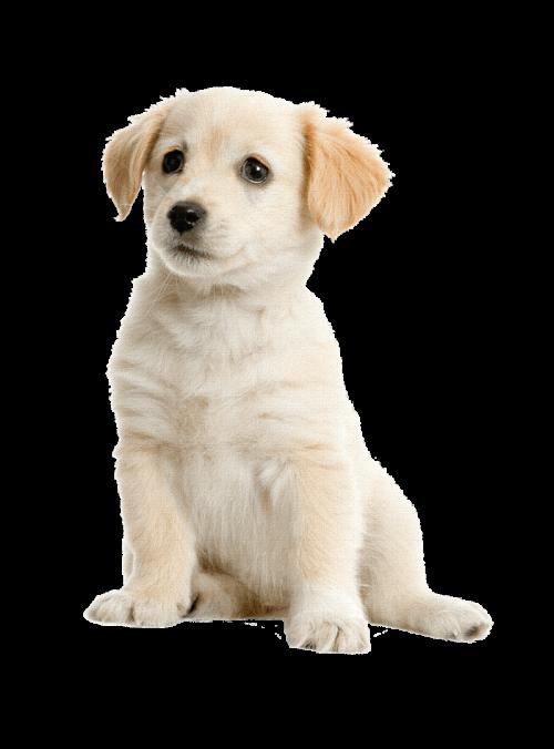 dogh4